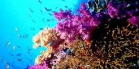 Offerte Vacanze Estate 2009: viaggio isole Indonesia e immersioni. Offerte viaggio Maggio-Giugno-Luglio 2009