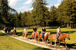 Image result for svizzera cavalli