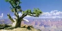 Offerta Viaggio Tour Stati Uniti da Luglio ad Ottobre 2009. Grand Canyon, Monument Valley, Las Vegas