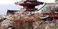 Offerte Viaggi del Mappamondo: Tour Giappone di 12 giorni. Tokyo, Kamakura, Osaka, Kumano, Ji Temple
