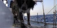 Vacanze in barca a vela con il cane da Ponza, Circeo, Porto turistico di Roma, Sicilia, Toscana e Sardegna