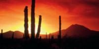 Vacanze in Messico: offerta viaggio Tour Messico valida fino a Novembre 2009. Da Città del Messico a Mérida