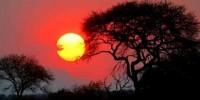 Offerte Viaggio in Sud Africa: immersioni e Safari in Sud Africa - Pacchetto viaggio e soggiorno in Sudafrica