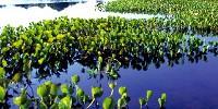 Turismo Eco-Sostenibile in Amazzonia: viaggio di 15 Giorni in Amazzonia (Brasile) nella Riserva Xixuau