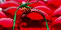 Natale in Fiera 2009 a Forlì: la fiera di Natale dal 27 al 29 Novembre 2009. Lo shopping di Natale a Forlì
