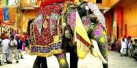 Vacanze in India Marzo 2011: la Festa degli Elefanti e dei colori di Jaipur. Offerta Viaggio Tour India 2011