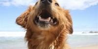 In vacanza con il cane: le spiagge d' Italia aperte ai cani per le vacanze al mare e i comuni amici degli animali