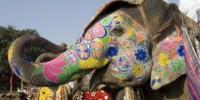 Offerta viaggio in India dal 4 al 12 Marzo 2012: la festa degli elefanti e dei colori di Jaipur (India)