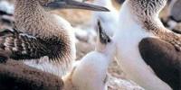 Viaggio alle Isole Galapagos (Ecuador-Sud-America): il Parco Nazionale Galapagos, le isole e le spiagge