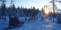 Vacanza sulla neve in Lapponia (Finlandia): lo sci a Yllas e il safari con i cani da slitta nel Parco Nazionale
