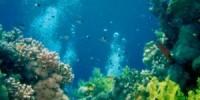 Vacanze in Australia: una crociera sub per vedere la Grande Barriera Corallina in Australia