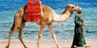Viaggio in Egitto sul Mar Rosso: vacanza economica a Sharm el Sheikh e a Marsa Alam (villaggi turistici)