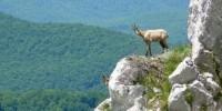 Vacanza nel Parco Nazionale d' Abruzzo, Lazio e Molise: escursioni e itinerari nel Parco Nazionale