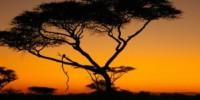 Viaggio in Tanzania (Africa) con safari nella riserva del Selous. Cosa vedere in una vacanza in Tanzania