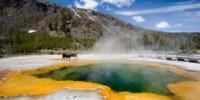 Stati Uniti: vacanza al Parco Nazionale di Yellowstone (Wyoming), il più antico parco nazionale del mondo