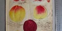 Complesso del Vittoriano di Roma: mostra gratuita Culturacibo fino al 7 Aprile 2013