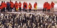 Georgia Australe-Viaggio a Royal Bay: l' isola dei pinguini in Antartide
