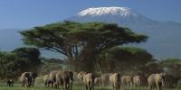 Tour organizzati e safari in Kenya (Africa): grandi parchi nazionali e riserve