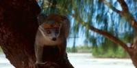 Tour 8 giorni Madagascar: Nosy Be-Antsiranana