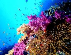 offerte-vacanze-estate-2009-viaggio-isole-indonesia-e-immersioni-offerte-viaggio-maggio-giugno-luglio-2009