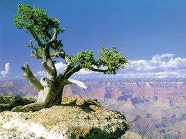 offerta-viaggio-tour-stati-uniti-da-luglio-ad-ottobre-2009-grand-canyon-monument-valley-las-vegas