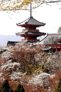 offerte-viaggi-del-mappamondo-tour-giappone-di-12-giorni-tokyo-kamakura-osaka-kumano-ji-temple