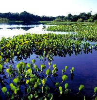 turismo-eco-sostenibile-in-amazzonia-viaggio-di-15-giorni-in-amazzonia-brasile-nella-riserva-xixuau